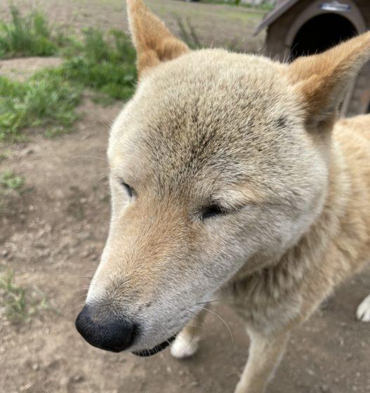 愛犬「ロト」の写真